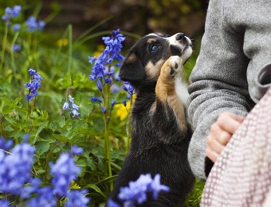 alergia-na-siersc-psa