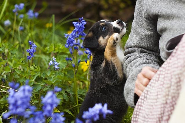 Alergia na sierść psa