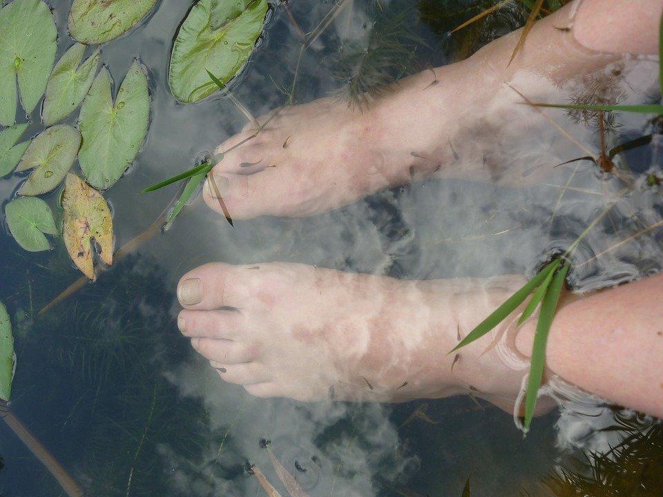 stopy całe w ziołach